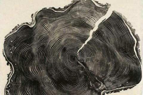 tranche-strie-arbre-01