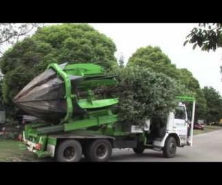 Comment déplacer un arbre