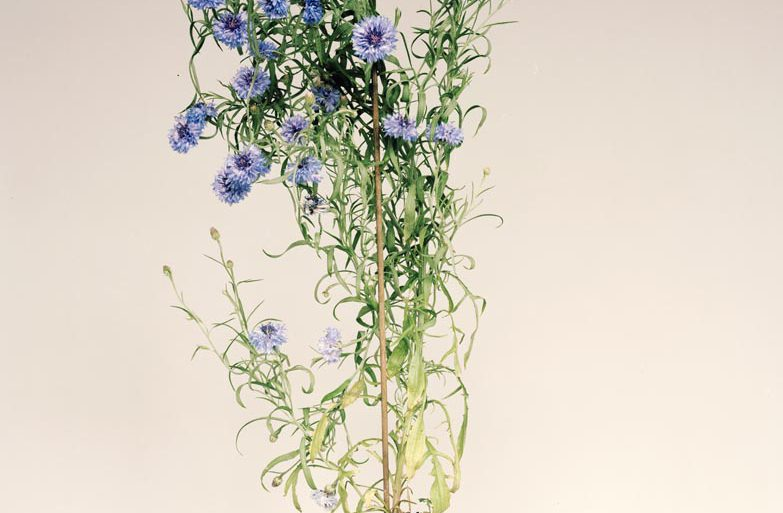 plante-pot-1