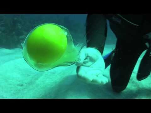 Ouvrir un oeuf 20m sous l'eau