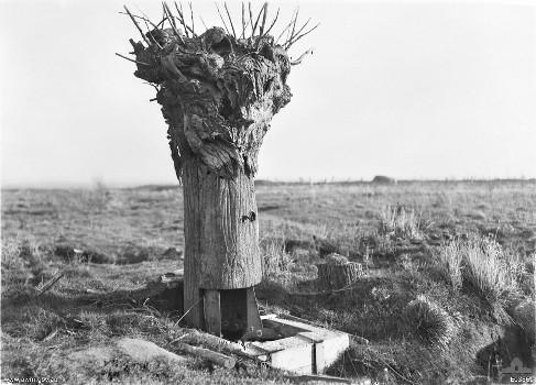 arbre-observation