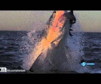 Des attaques de requins au ralenti