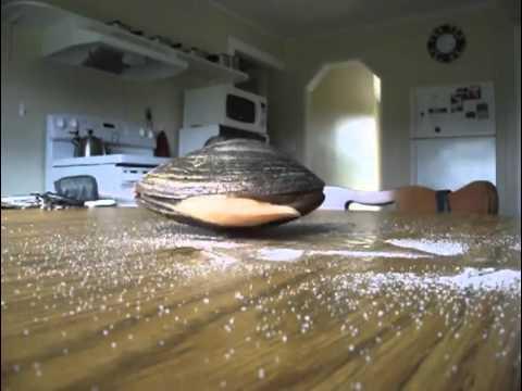 Des mollusques qui mangent du sel