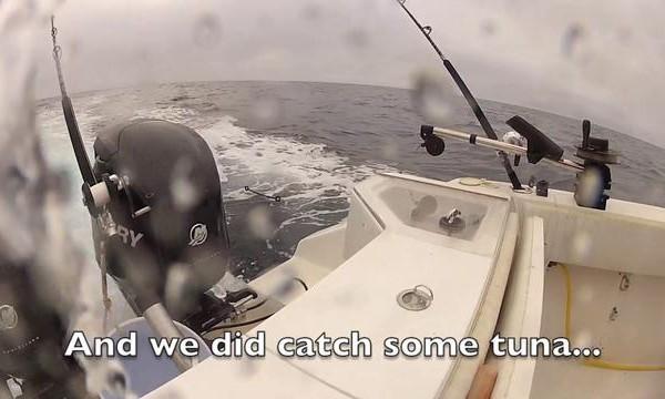 Une torpille et des dauphins