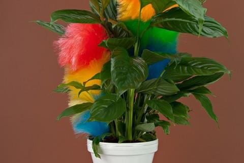 ustensile-plante-01