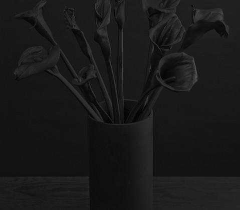 PageImage-482770-3139774-flora255