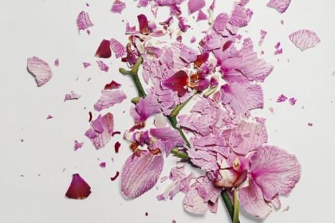 fleur-azote-liquide-casse-01