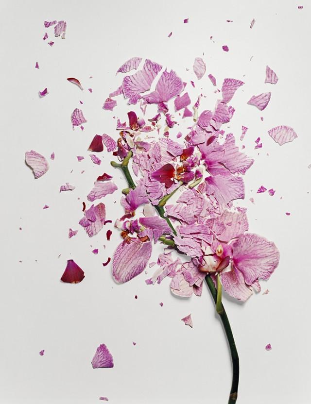 fleur azote liquide casse 01 Des fleurs plongées dans de lazote liquide brisées  photographie bonus art