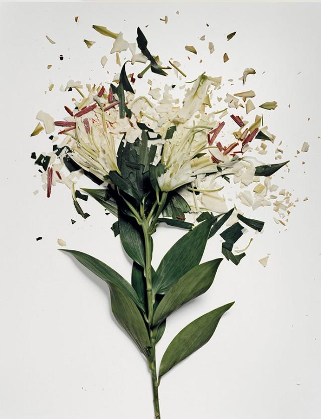 fleur azote liquide casse 04 Des fleurs plongées dans de lazote liquide brisées  photographie bonus art