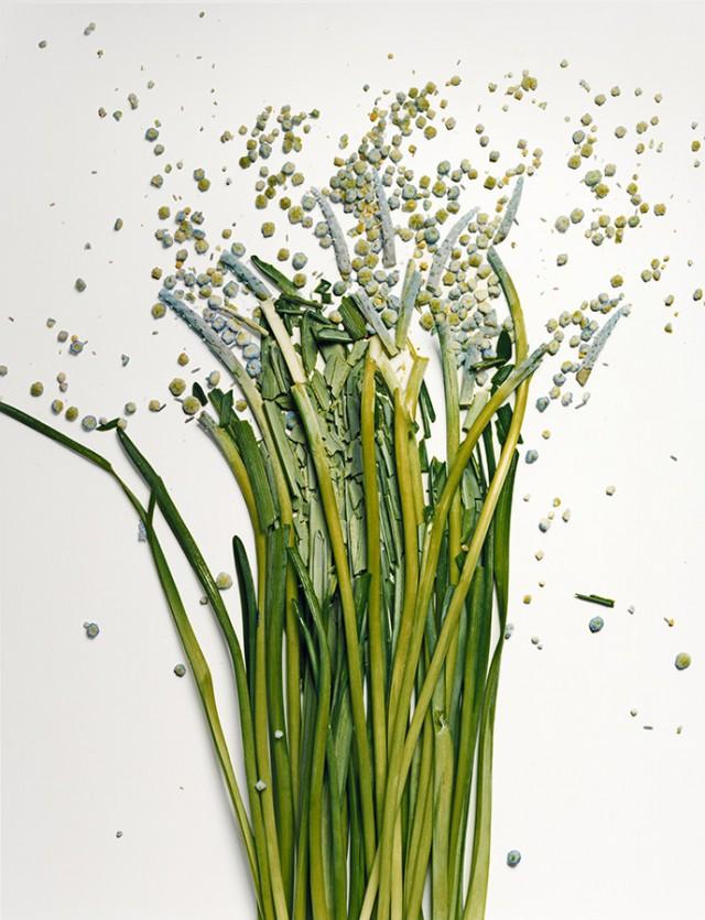 fleur azote liquide casse 06 Des fleurs plongées dans de lazote liquide brisées  photographie bonus art