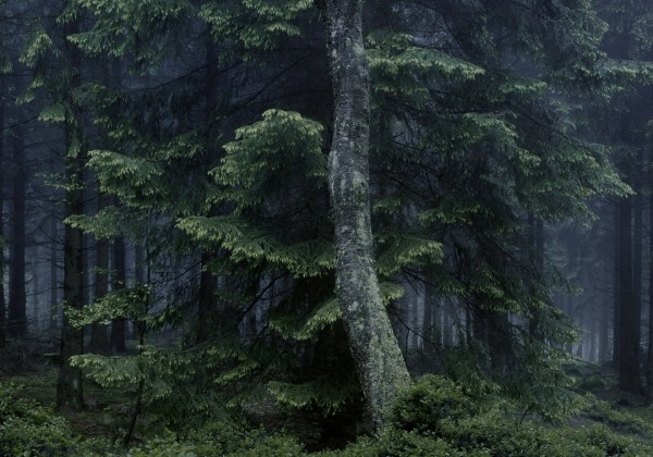 Wald Forest