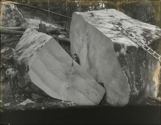 gros arbre coupe 02 Couper des gros arbres