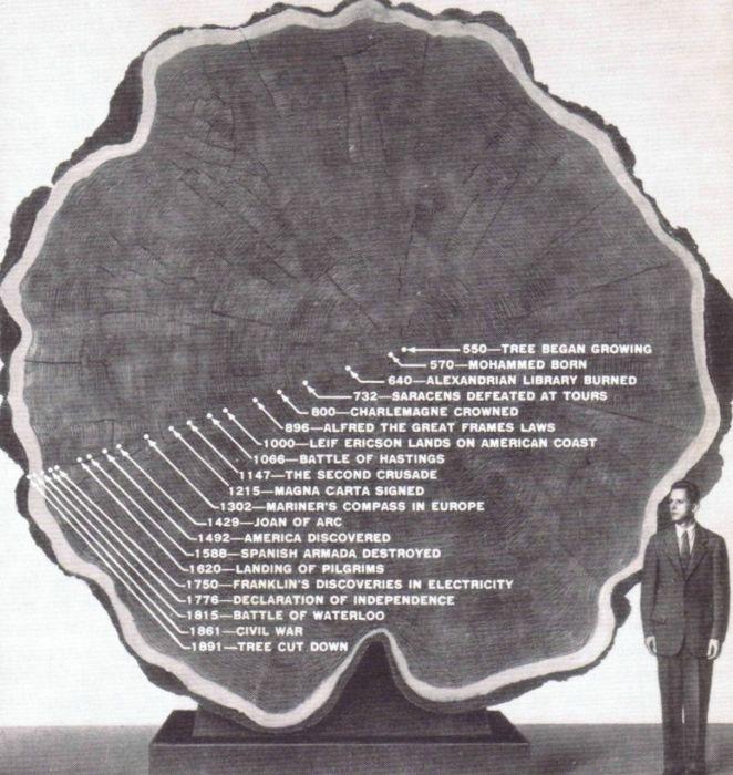gros arbre coupe 16 Couper des gros arbres