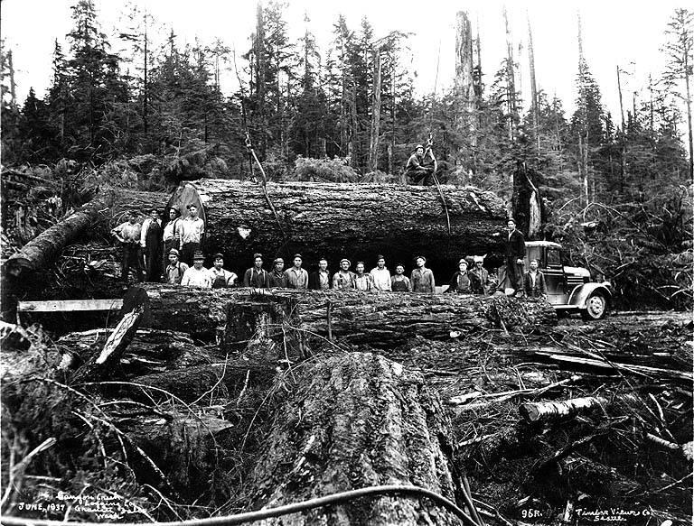 gros arbre coupe 26 Couper des gros arbres