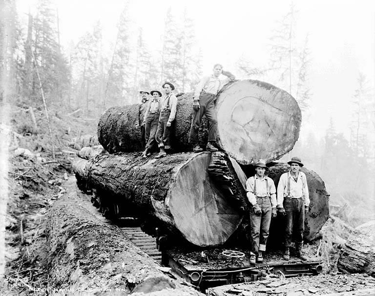 gros arbre coupe 27 Couper des gros arbres