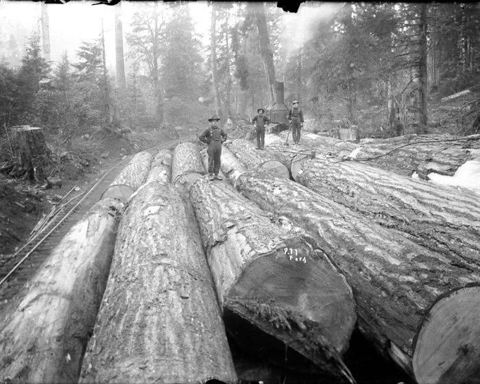 gros arbre coupe 29 Couper des gros arbres