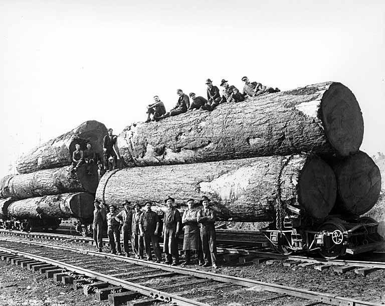 gros arbre coupe 30 Couper des gros arbres