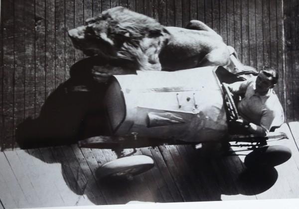 lion-moto-voiture-mur-mort-01