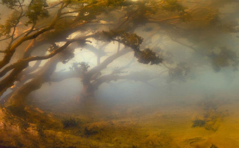 paysage miniature aquatique 04 Des paysages miniatures aquatiques