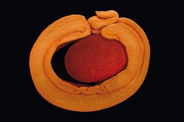 vegetaux-microscope-01