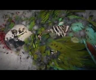 Des dermestes qui mangent des oiseaux morts
