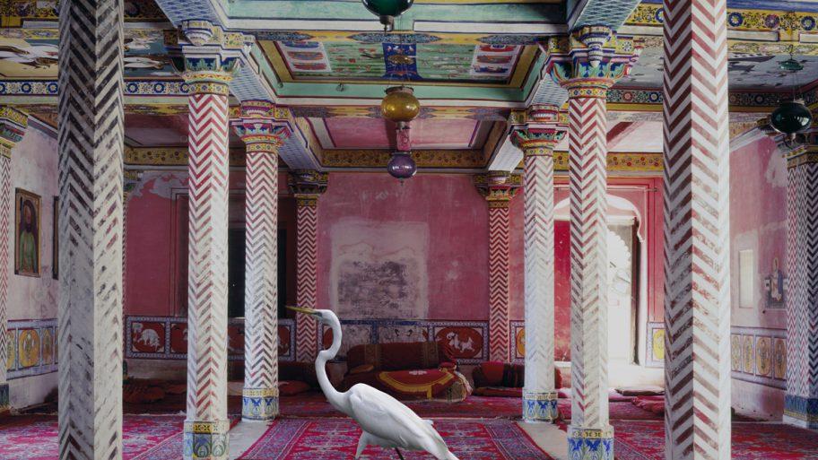 animaux-palace-01