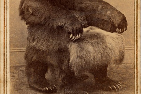 fauteuil-ours