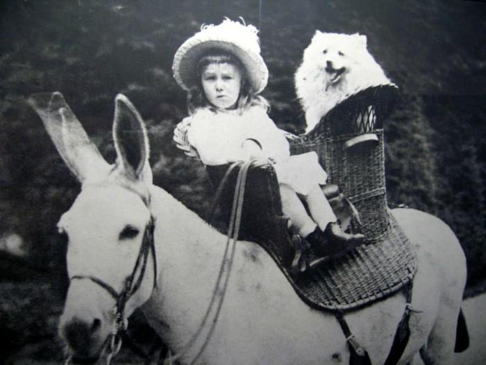 mysterio 700x525 [Mystère #31] Franklin D. Roosevelt sur un âne avec son chien