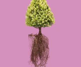 plante-racine-01
