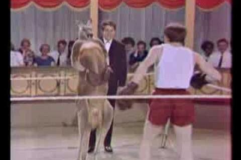 Woody Allen boxe un Kangourou