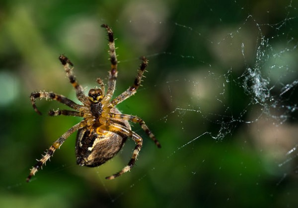 Une araignée tisse sa toile