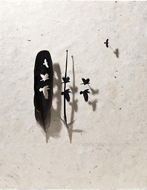 plume-decoupe-08
