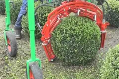 Comment tailler des arbustes en boules ou en cônes