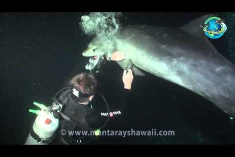 Un dauphin appelle à l'aide un plongeur