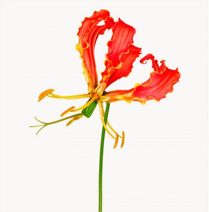 AZ_Flower