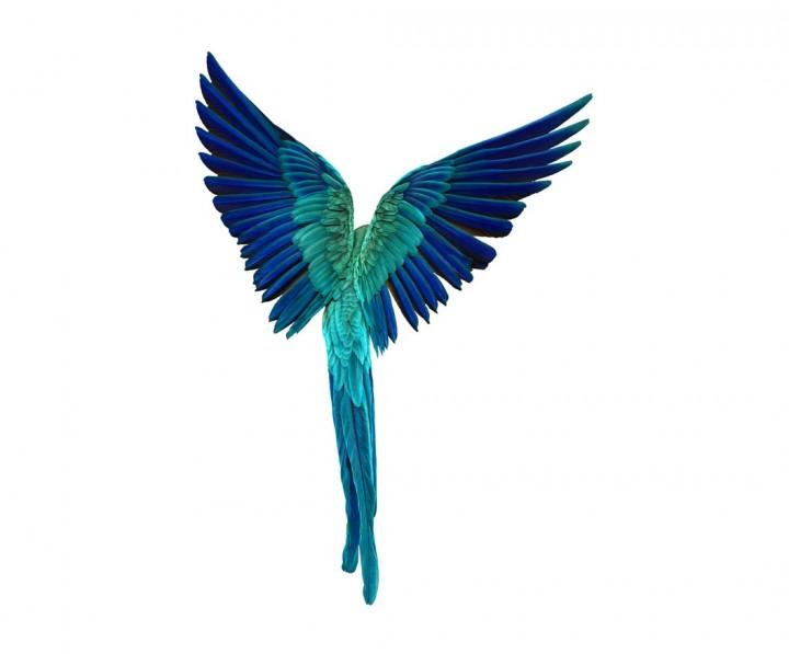 andrew-zuckerman-oiseau-01