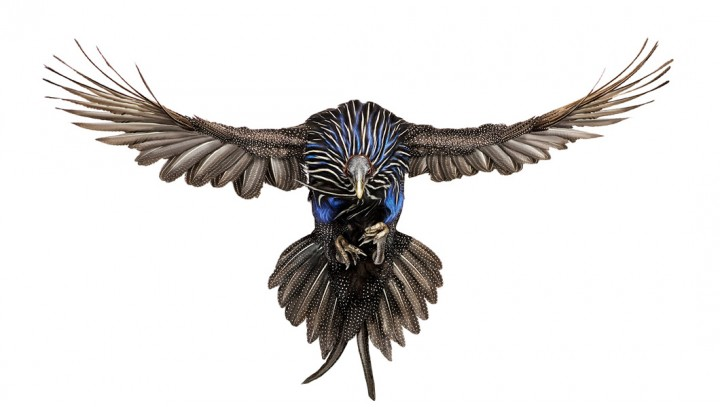 andrew-zuckerman-oiseau-05