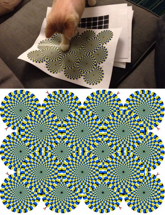 cat-optical-illusion