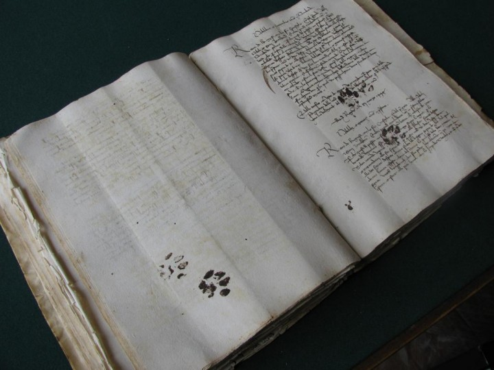 manuscrit-patte-chat