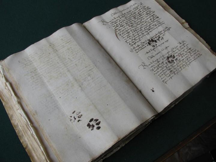 manuscrit-patte-chat