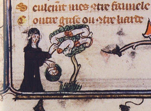 marginalia enluminure etrange moyen age 34 Des enluminures étranges au Moyen Age  peinture 2 histoire design bonus art