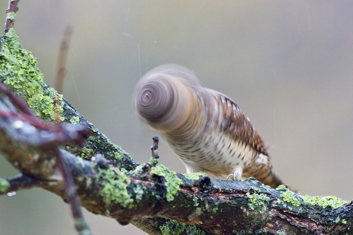 oiseau-tete-tourne