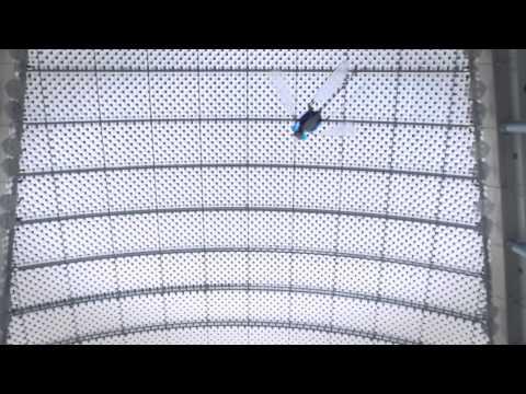 Un robot libellule