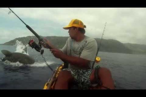 Un requin et un kayak