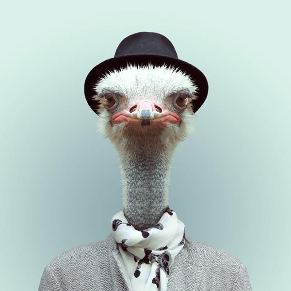 portraits-animaux-habilles-01