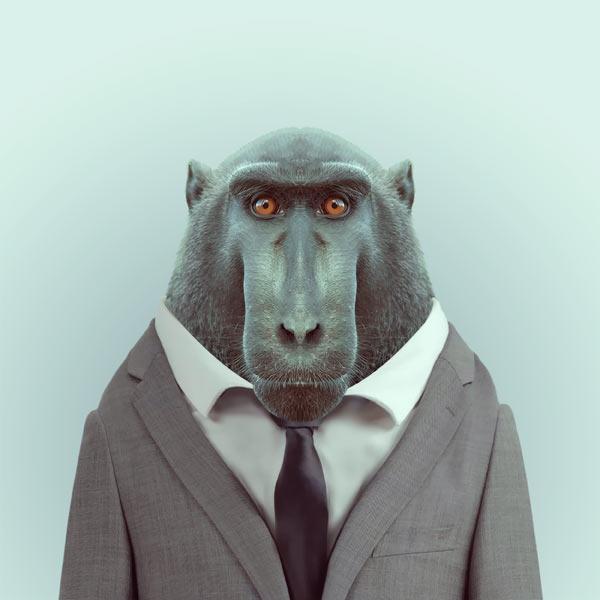 portraits-animaux-habilles-09
