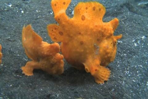 Le monde étrange des prédateurs marins
