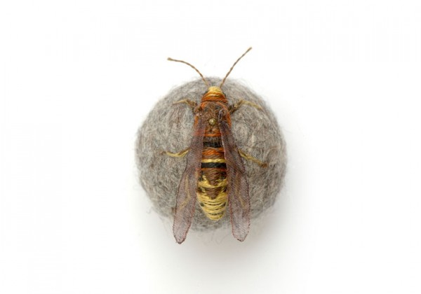 insecte-brode-boule-01