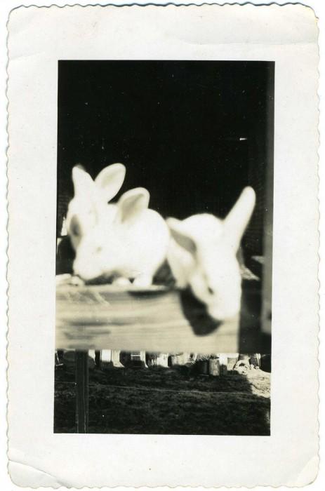 mauvaise photo loupe vieux 31 463x700 Des photos loupées à lancienne  photographie histoire bonus art