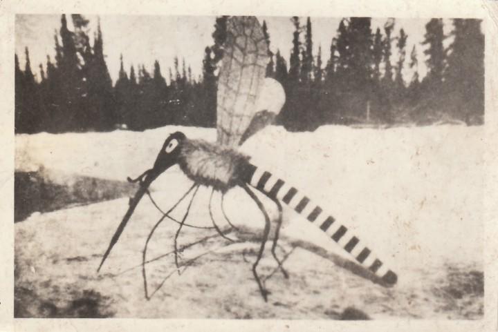 attaque moustique geant 01 720x481 Lattaque du moustique géant  photo histoire bonus